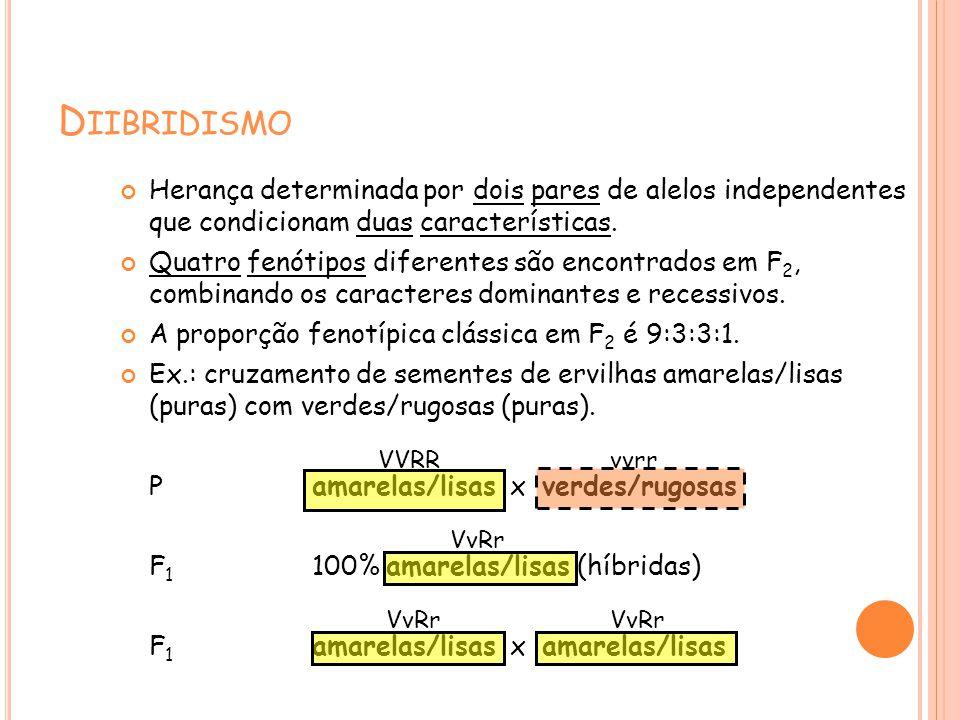 D IIBRIDISMO Herança determinada por dois pares de alelos independentes que condicionam duas características. Quatro fenótipos diferentes são encontra