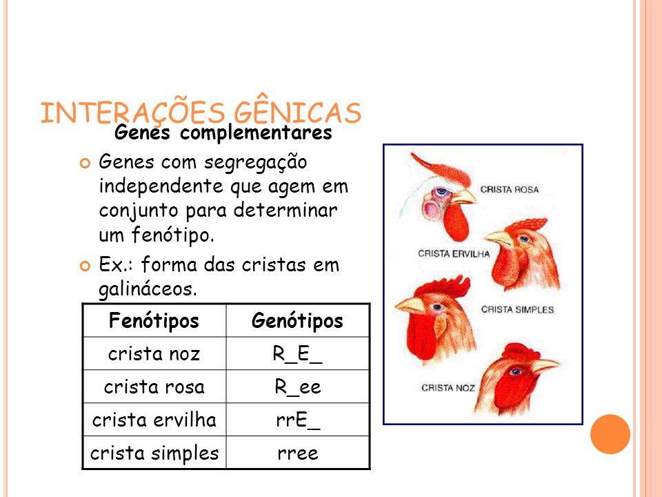 INTERAÇÕES GÊNICAS Genes complementares Genes com segregação independente que agem em conjunto para determinar um fenótipo.