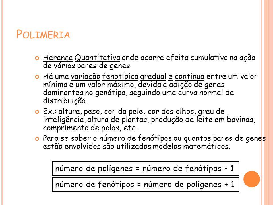 P OLIMERIA Herança Quantitativa onde ocorre efeito cumulativo na ação de vários pares de genes. Há uma variação fenotípica gradual e contínua entre um