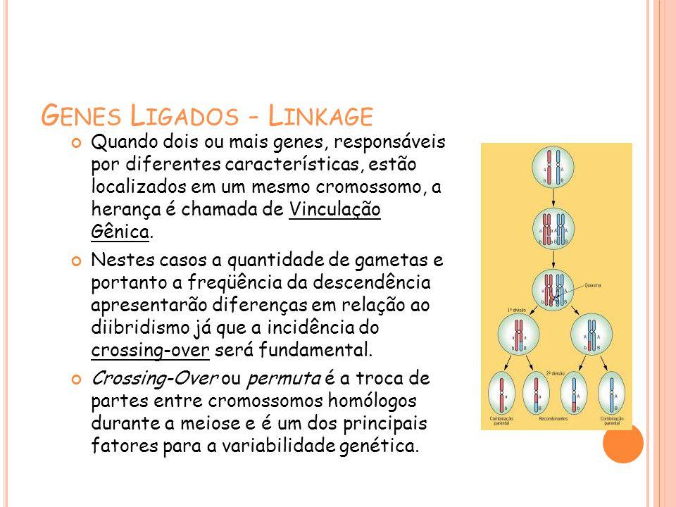 G ENES L IGADOS - L INKAGE Quando dois ou mais genes, responsáveis por diferentes características, estão localizados em um mesmo cromossomo, a herança é chamada de Vinculação Gênica.
