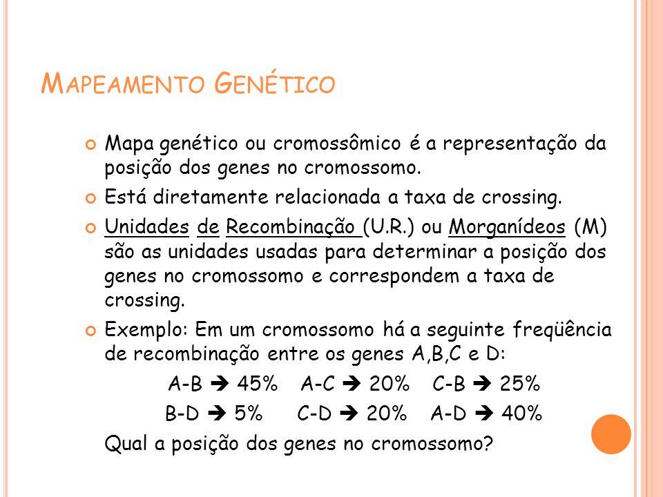 M APEAMENTO G ENÉTICO Mapa genético ou cromossômico é a representação da posição dos genes no cromossomo.