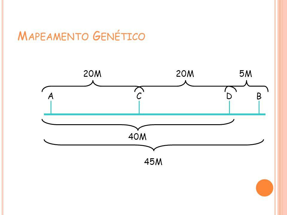 M APEAMENTO G ENÉTICO ACDB 45M 40M 20M 5M