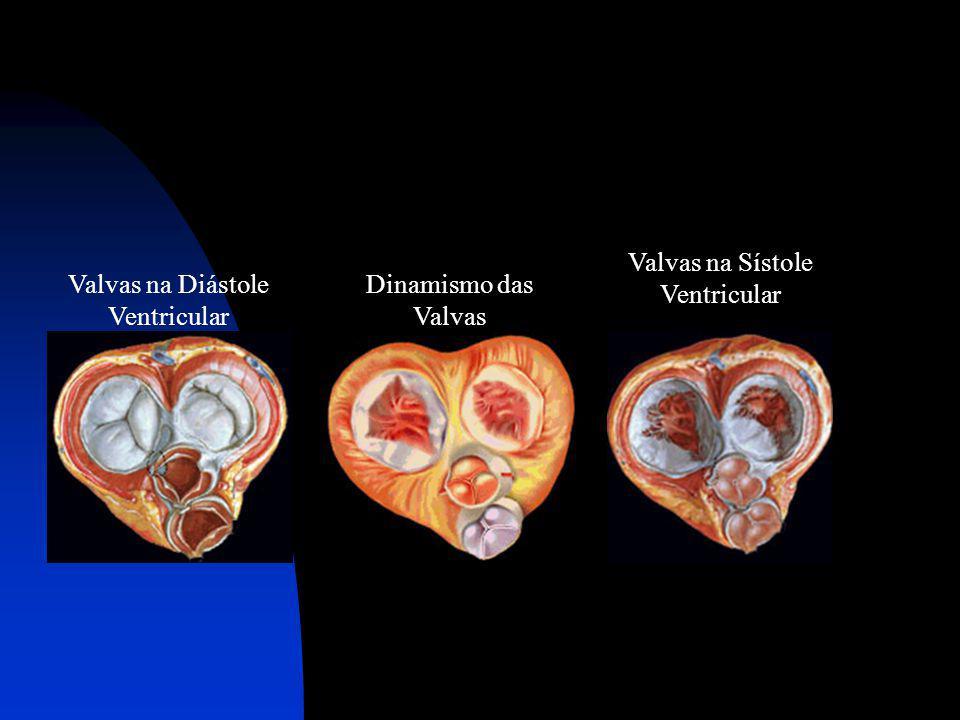 Valvas na Diástole Ventricular Dinamismo das Valvas Valvas na Sístole Ventricular