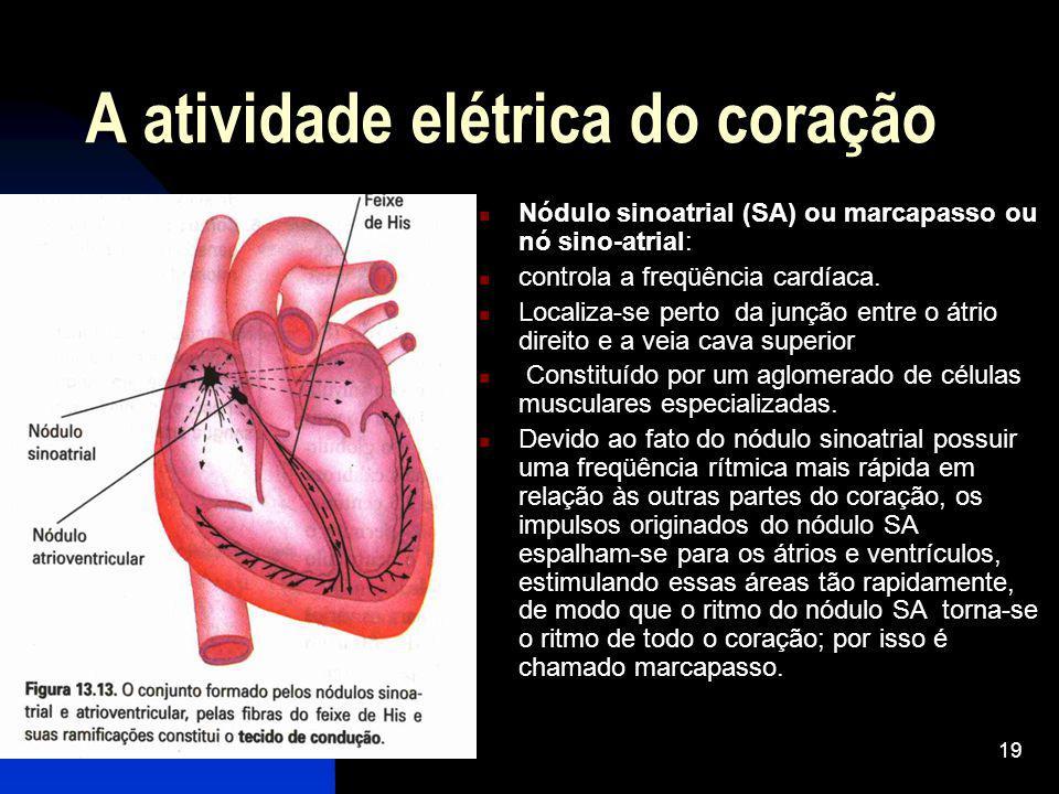 19 A atividade elétrica do coração Nódulo sinoatrial (SA) ou marcapasso ou nó sino-atrial: controla a freqüência cardíaca. Localiza-se perto da junção