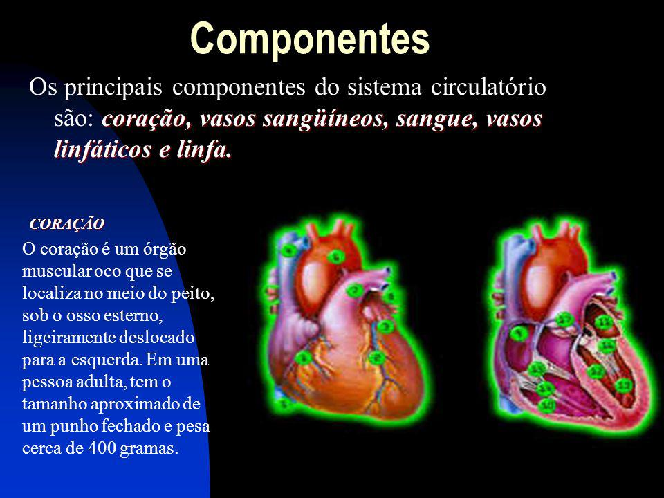 Componentes coração, vasos sangüíneos, sangue, vasos linfáticos e linfa. Os principais componentes do sistema circulatório são: coração, vasos sangüín
