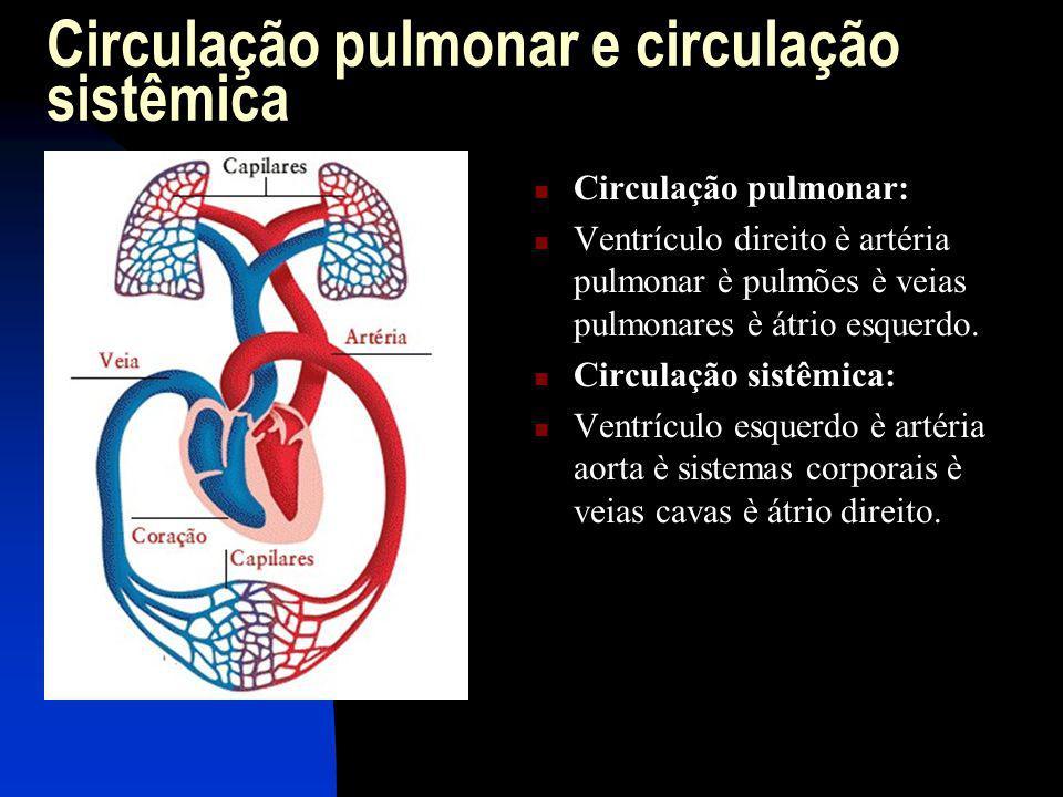 Circulação pulmonar e circulação sistêmica Circulação pulmonar: Ventrículo direito è artéria pulmonar è pulmões è veias pulmonares è átrio esquerdo. C