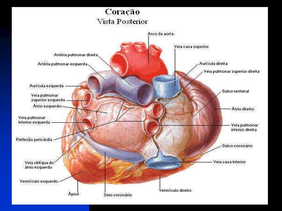 ALGUNS DISTÚRBIOS CARDÍACOS Sopro no coração É uma alteração no fluxo do sangue dentro do coração provocada por problemas em uma ou mais válvulas cardíacas ou por lesões nas paredes das câmaras.