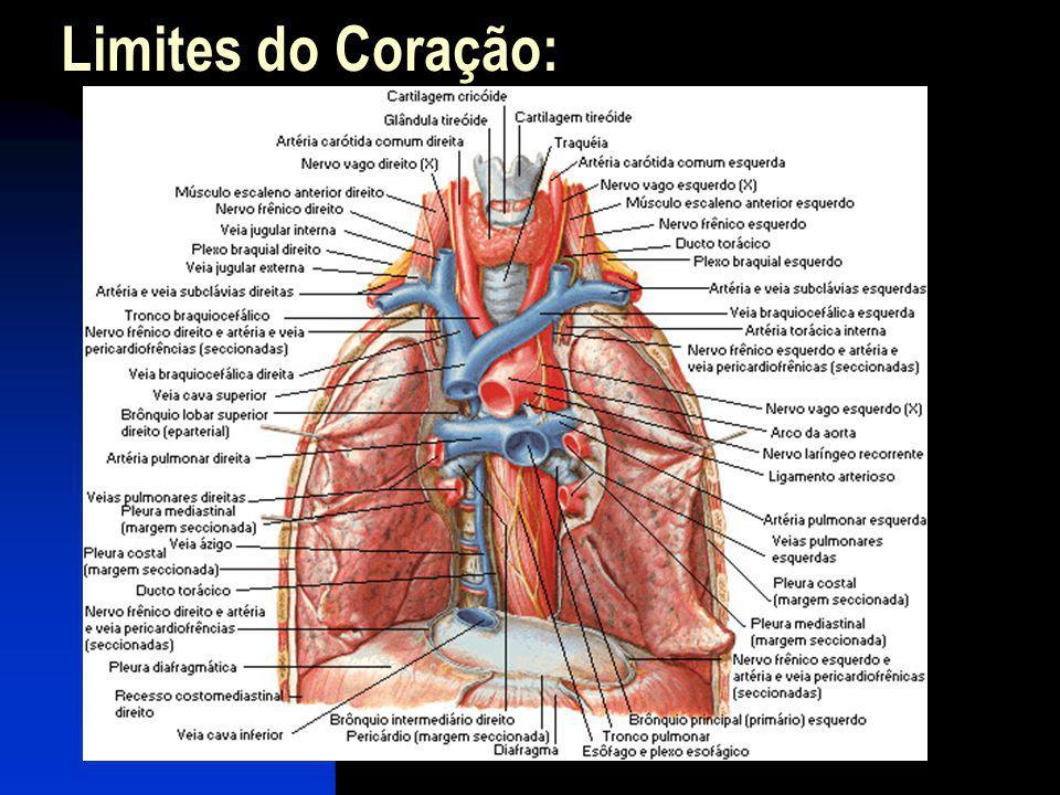 Saco Pericárdio: