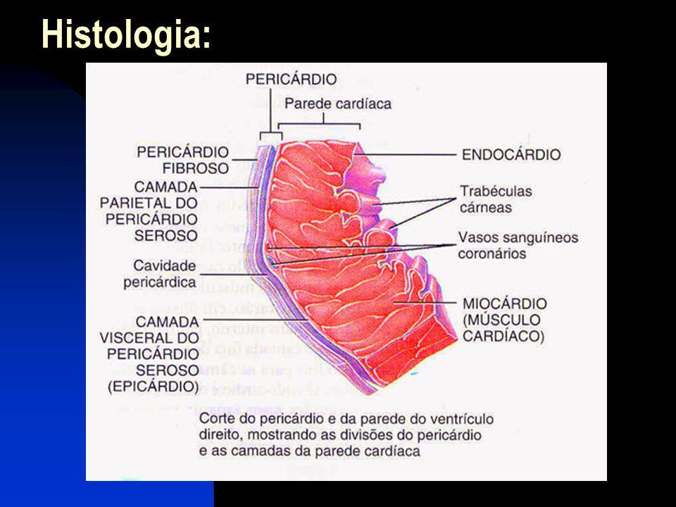 Sístole Ventricular - Ação das Valvas Atrioventriculares