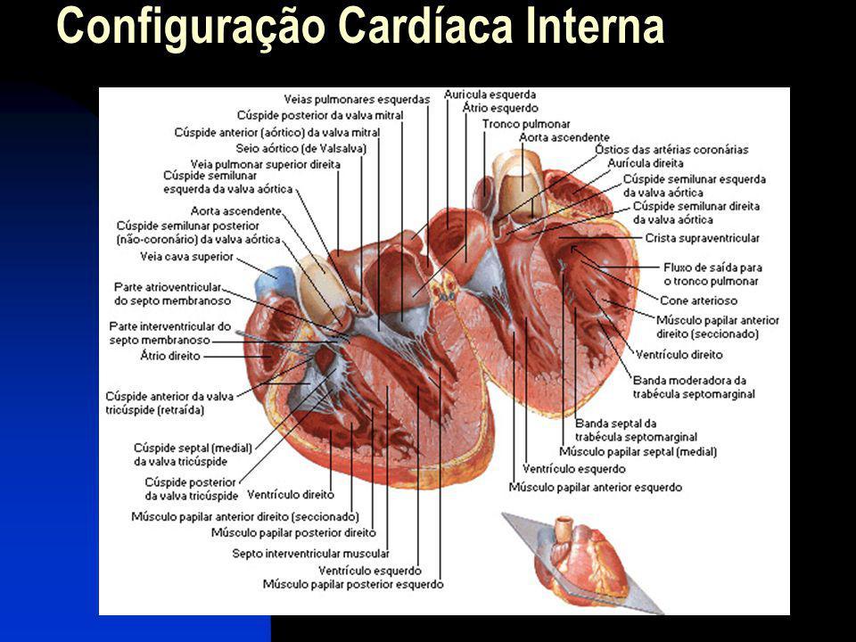 Sistema Elétrico do Coração