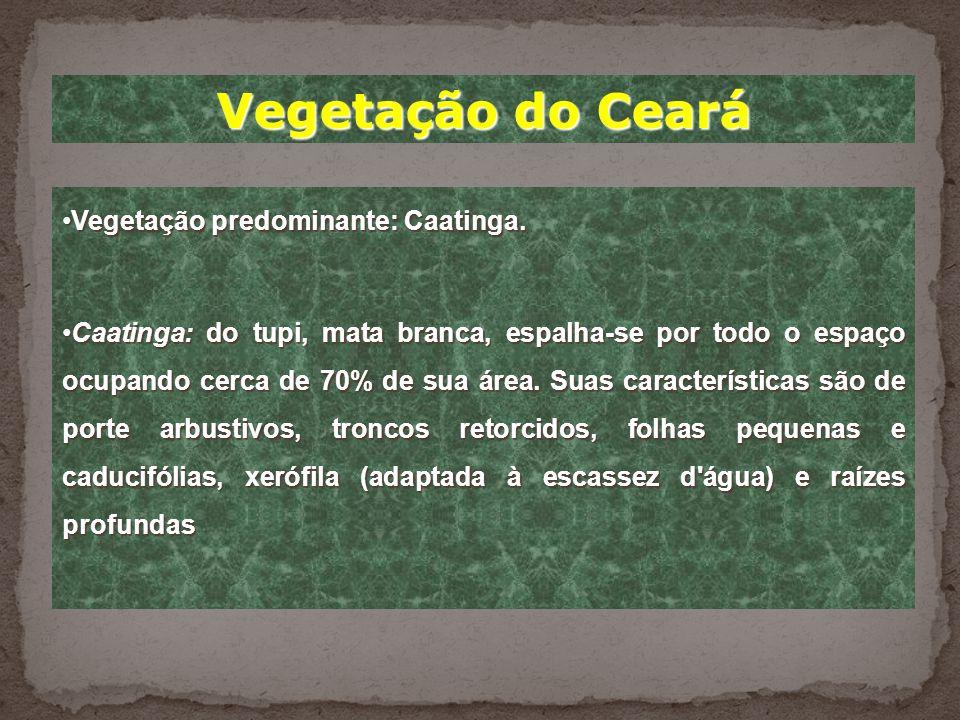 Clima do Ceará * No Ceará há dois tipos de clima: - Faixa litorânea, clima mais ameno graças as brisas marinhas. - Clima semiárido, caracterizado por