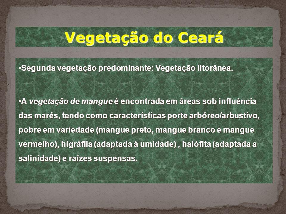Vegetação do Ceará Vegetação predominante: Caatinga.Vegetação predominante: Caatinga. Caatinga: do tupi, mata branca, espalha-se por todo o espaço ocu
