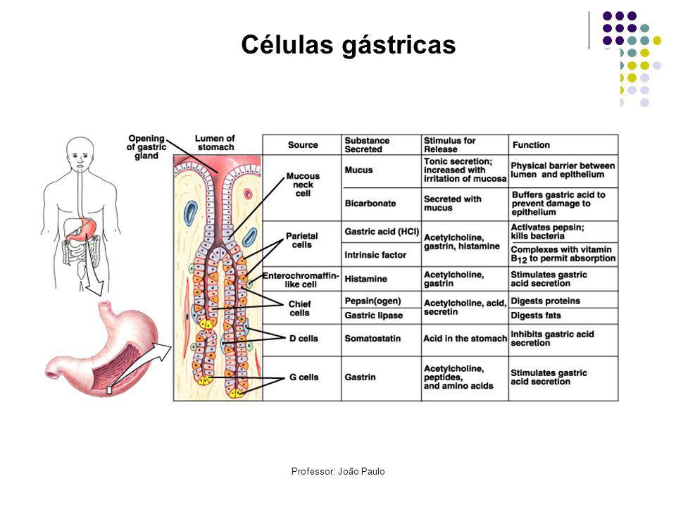 Professor: João Paulo Células gástricas