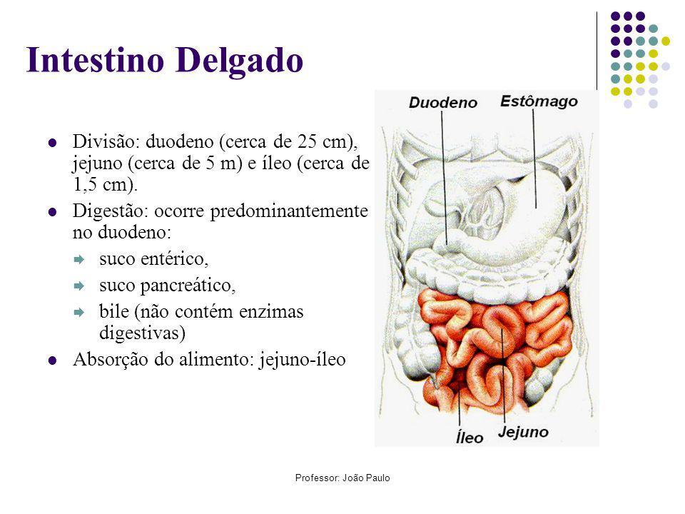 Professor: João Paulo Intestino Delgado Divisão: duodeno (cerca de 25 cm), jejuno (cerca de 5 m) e íleo (cerca de 1,5 cm).
