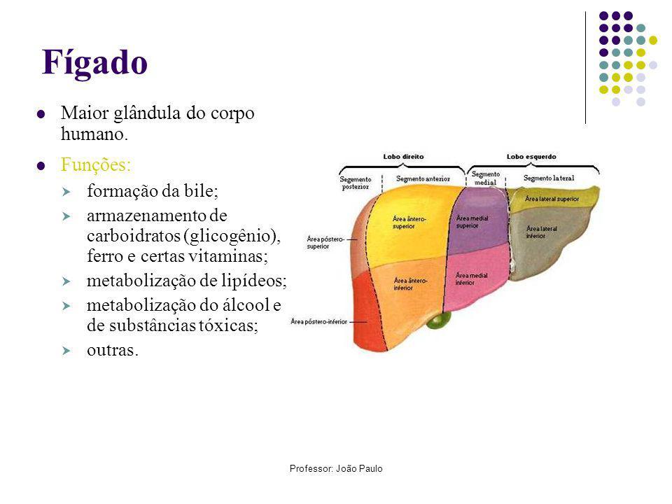 Professor: João Paulo Fígado Maior glândula do corpo humano.