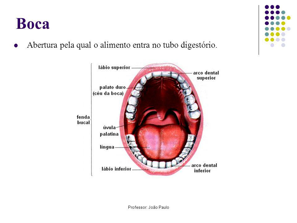 Professor: João Paulo Boca Abertura pela qual o alimento entra no tubo digestório.