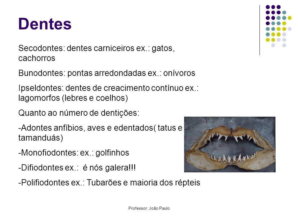 Professor: João Paulo Dentes Secodontes: dentes carniceiros ex.: gatos, cachorros Bunodontes: pontas arredondadas ex.: onívoros Ipseldontes: dentes de creacimento contínuo ex.: lagomorfos (lebres e coelhos) Quanto ao número de dentições: -Adontes anfíbios, aves e edentados( tatus e tamanduás) -Monofiodontes: ex.: golfinhos -Difiodontes ex.: é nós galera!!.