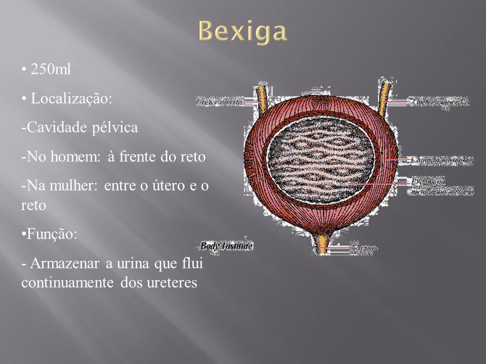 250ml Localização: -Cavidade pélvica -No homem: à frente do reto -Na mulher: entre o útero e o reto Função: - Armazenar a urina que flui continuamente