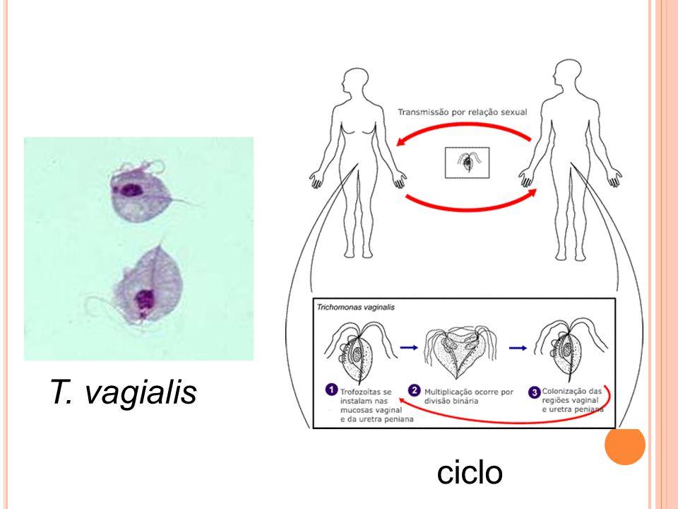 T. vagialis ciclo