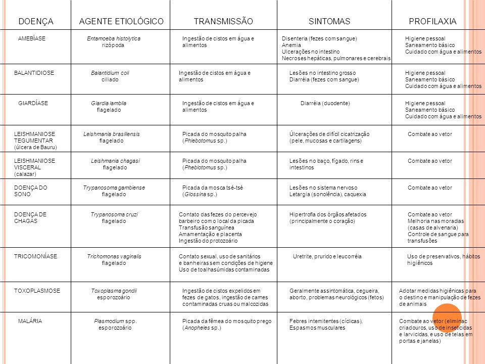 DOENÇA AGENTE ETIOLÓGICOTRANSMISSÃOSINTOMAS PROFILAXIA AMEBÍASEEntamoeba histolytica rizópoda Ingestão de cistos em água e alimentos Disenteria (fezes