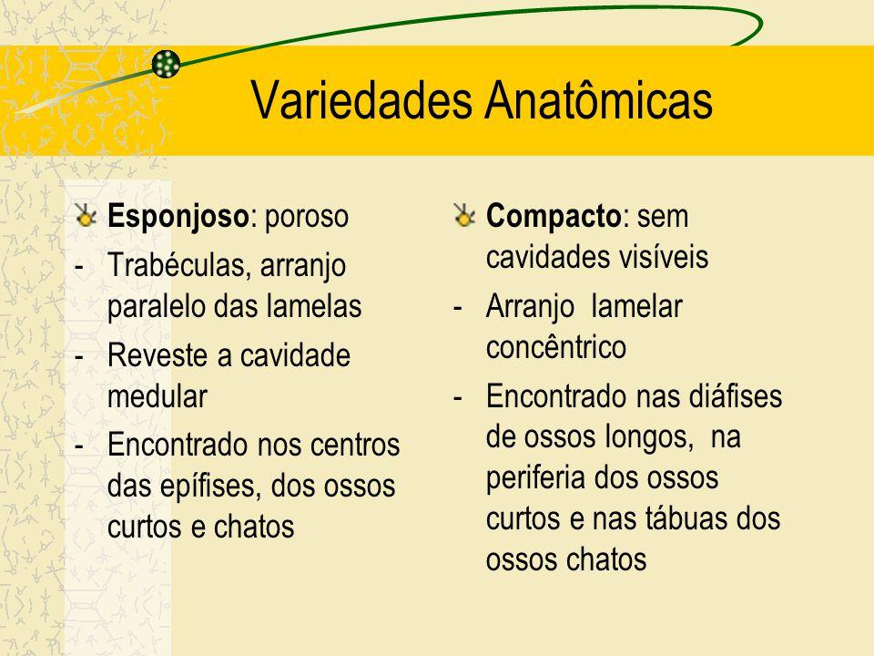 Estrutura do Osso Variedades anatômicas: - esponjoso - compacto Variedades histológicas: - primário - secundário
