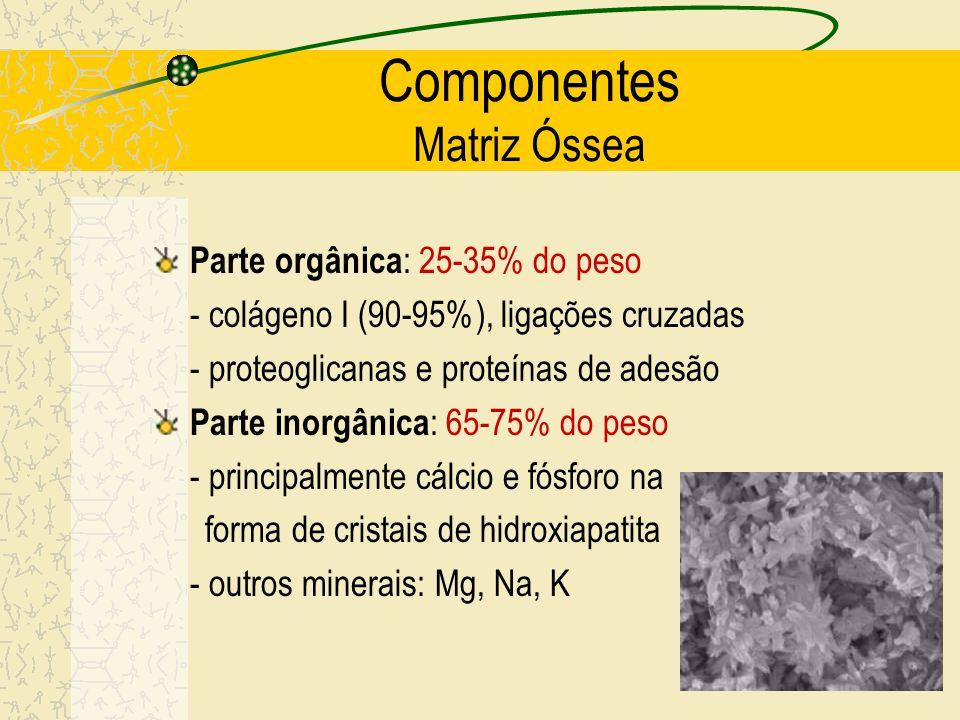 Características e funções Forma especializada de tecido conjuntivo rígido, com matriz mineralizada (calcificada); Possui vascularização, inervação Apr