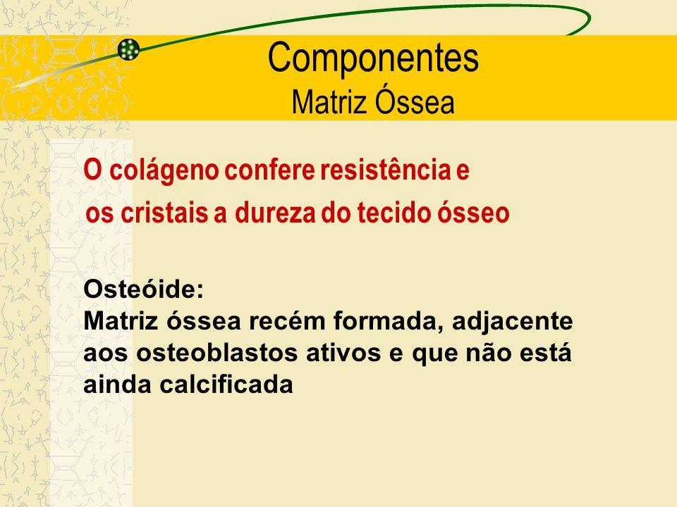 Componentes Matriz Óssea Parte orgânica : 25-35% do peso - colágeno I (90-95%), ligações cruzadas - proteoglicanas e proteínas de adesão Parte inorgân