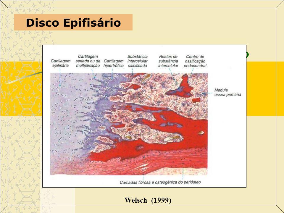 Superfície Articular (diartroses) Welsch (1999) Membrana sinovial: Macrófagos (Células A) Fibroblastos (Células B) Líquido sinovial: Ácido hialurônico