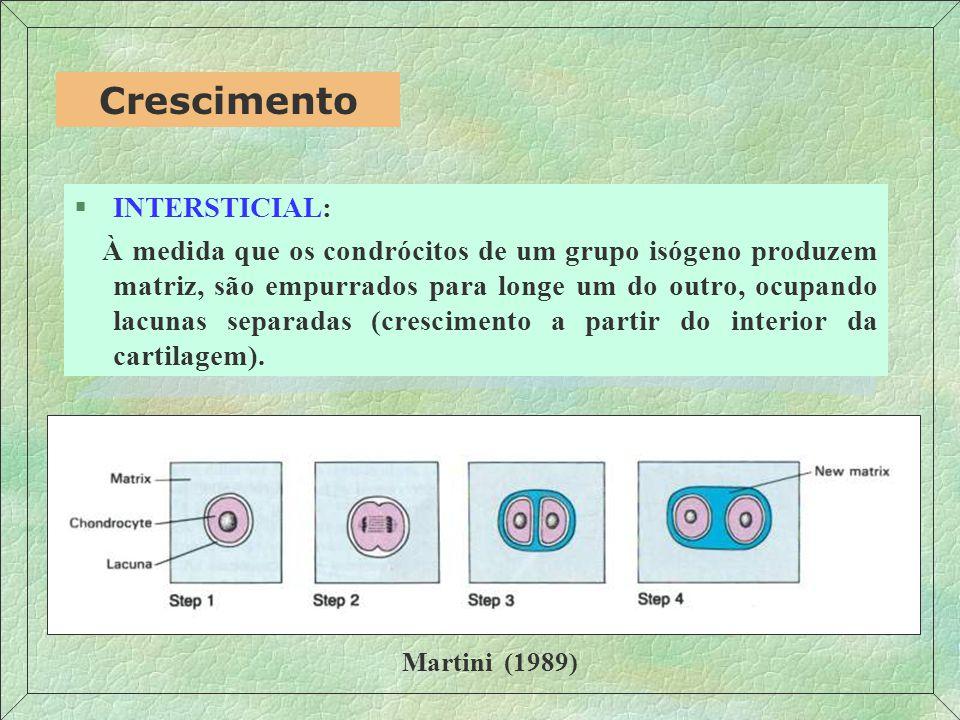 §INTERSTICIAL: À medida que os condrócitos de um grupo isógeno produzem matriz, são empurrados para longe um do outro, ocupando lacunas separadas (crescimento a partir do interior da cartilagem).