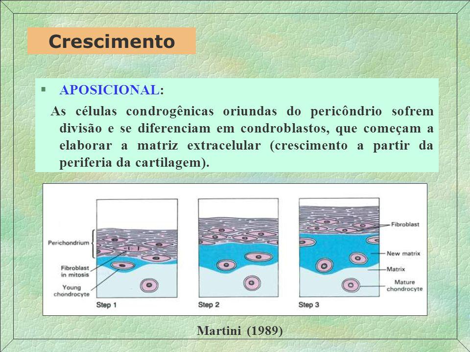 §APOSICIONAL: As células condrogênicas oriundas do pericôndrio sofrem divisão e se diferenciam em condroblastos, que começam a elaborar a matriz extracelular (crescimento a partir da periferia da cartilagem).