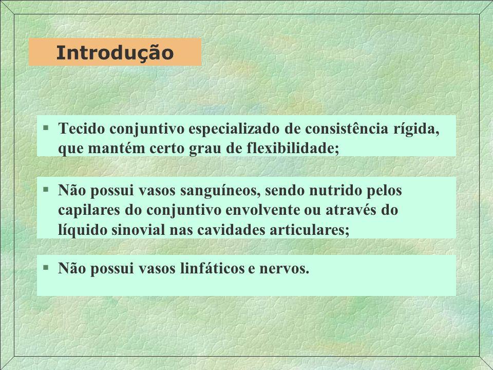 §Suporte de tecidos moles; Funções §Revestimento de superfícies articulares para absorção de choques e facilitação de deslizamentos; §Participação na formação e crescimento de ossos longos; §Forma o molde inicial de muitos ossos durante o desenvolvimento embrionário.