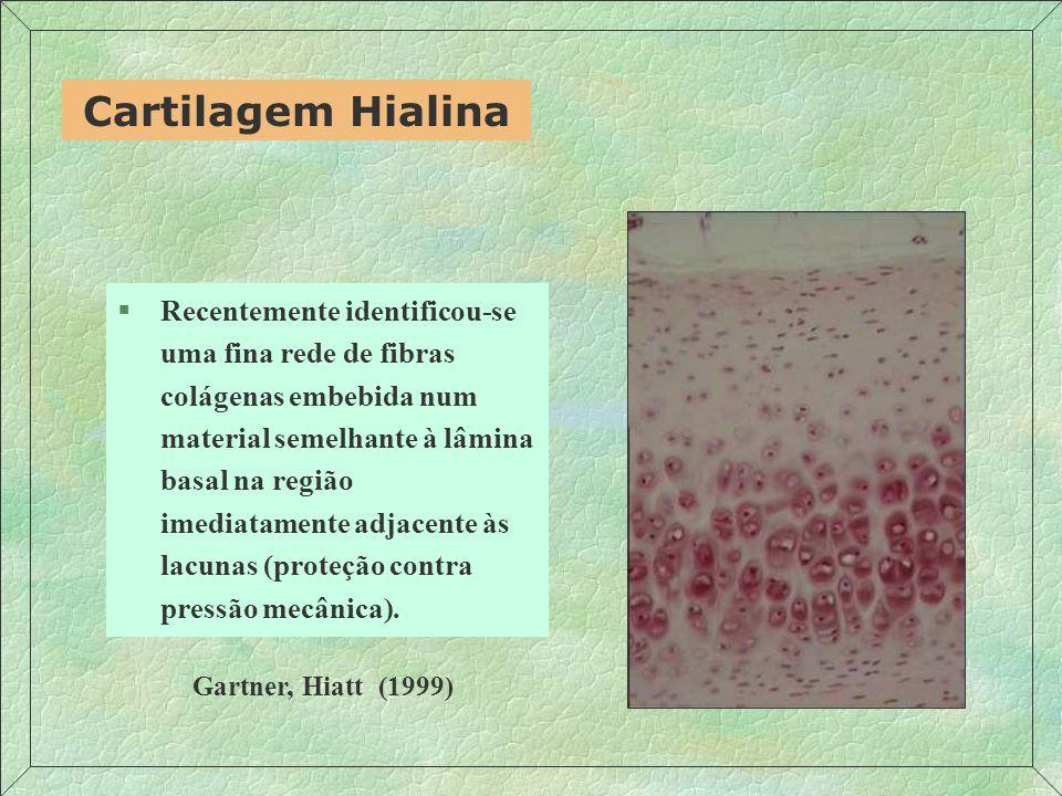 Cartilagem Hialina §Recentemente identificou-se uma fina rede de fibras colágenas embebida num material semelhante à lâmina basal na região imediatamente adjacente às lacunas (proteção contra pressão mecânica).