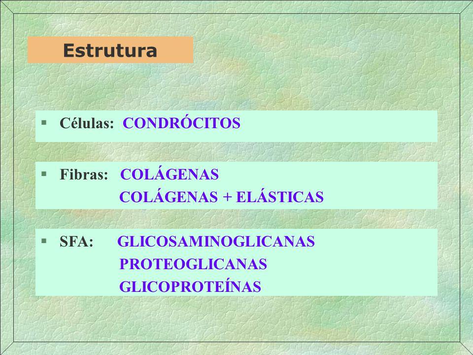 §Compostos de agrecana preenchem o interstício entre os feixes de fibras colágenas; Gartner, Hiatt (1999) Cartilagem §100 a 200 moléculas de agregana se ligam não covalentemente ao ácido hialurônico;