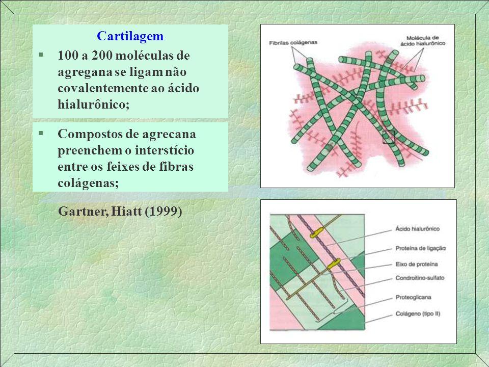 Cartilagem Elástica (Aldeído-fucsina) §Os condrócitos são mais numerosos e maiores e a matriz é menos abundante em relação à hialina; §Na matriz territorial os feixes de fibras elásticas são mais abundantes e espessos que no resto da matriz.