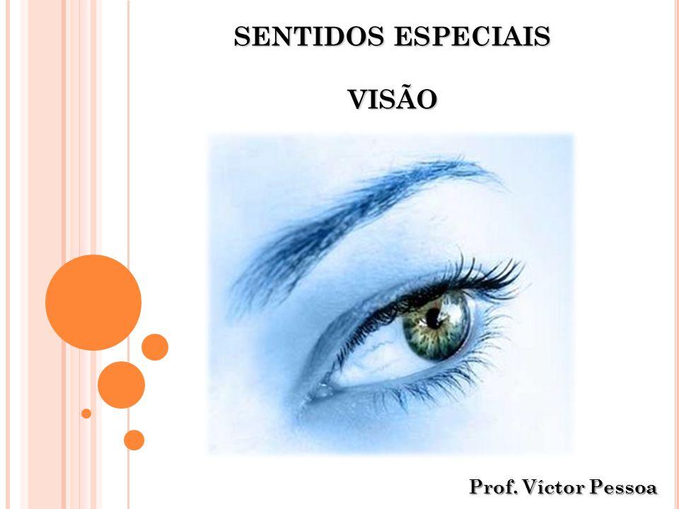 ANATOMIA SUPERFICIAL DO OLHO 123456 78910 11 (1) Pestanas (projeção da borda de cada pálpebra) (2) Sobrancelha (forma um arco sobre a pálpebra superior) (3) Pupila (orifício no centro da íris – entrada de luz no globo ocular) (4) Íris (parte colorida do olho – regula a quantidade de luz que entra no globo ocular) (5) Pálpebra superior (6) Carúncula lacrimal (contém glândulas sebáceas e sudoríparas) (7) Comissura lateral (ângulos da fissura palpebral) (8) Fissura palpebral (espaço entre as duas pálpebras) (9) Pálpebra inferior (10) Conjuntiva (membrana mucosa situada sobre a esclera) (11) Comissura medial (onde se encontra a carúncula lacrimal) Proteção do globo ocular de objetos estranhos, da perspiração e dos raios diretos do sol Víctor Pessoa