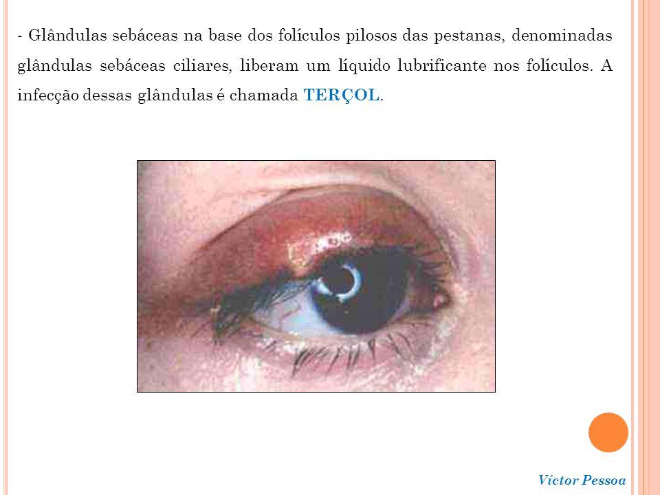 Víctor Pessoa Íris - Parte colorida do globo ocular; - Localiza-se entre a córnea e o cristalino; - Constituída, basicamente, por músculo liso radial e circular; - Regula a quantidade de luz que entra na câmara vítrea do globo ocular, passando pela PUPILA, o orifício no centro da íris; - Reflexos autonômicos regulam o diâmetro da pupila, em resposta à intensidade luminosa.