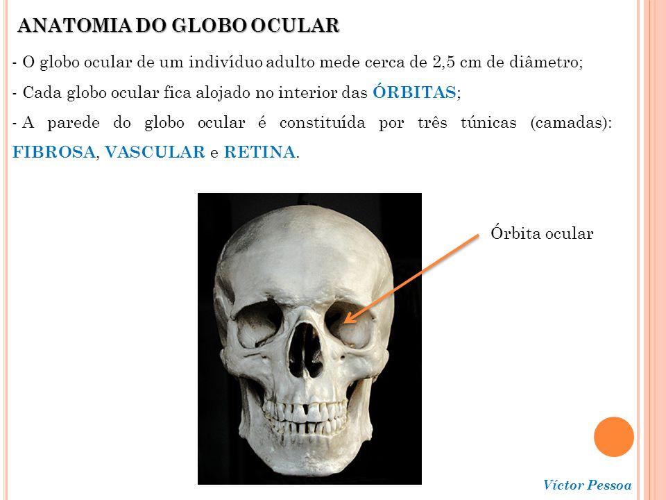Víctor Pessoa TÚNICA FIBROSA - Camada mais superficial do globo ocular; - Formada pela CÓRNEA e pela ESCLERA (branco do olho).