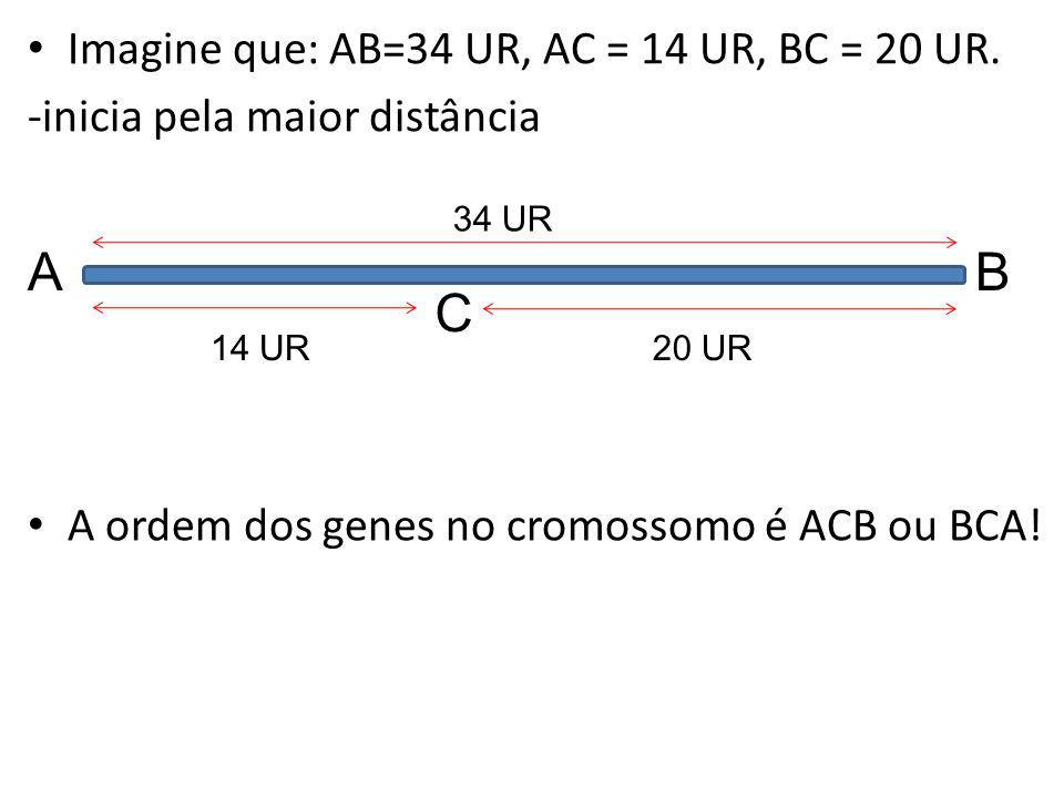 Imagine que: AB=34 UR, AC = 14 UR, BC = 20 UR. -inicia pela maior distância AB 34 UR C 14 UR20 UR A ordem dos genes no cromossomo é ACB ou BCA!