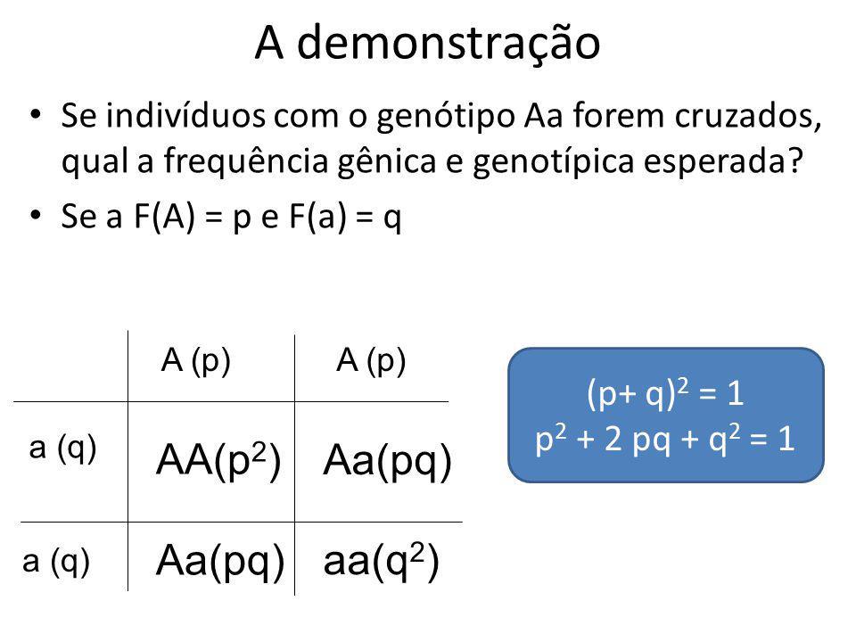 A demonstração Se indivíduos com o genótipo Aa forem cruzados, qual a frequência gênica e genotípica esperada? Se a F(A) = p e F(a) = q A (p) a (q) AA
