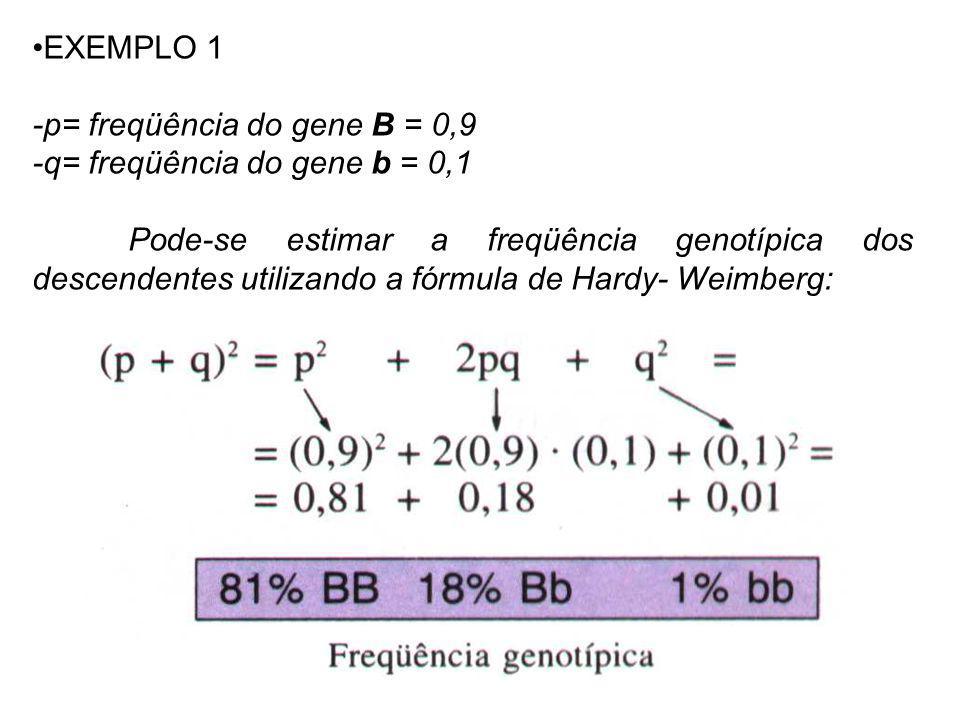 EXEMPLO 1 -p= freqüência do gene B = 0,9 -q= freqüência do gene b = 0,1 Pode-se estimar a freqüência genotípica dos descendentes utilizando a fórmula