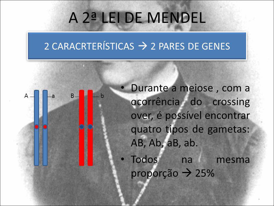 A 2ª LEI DE MENDEL Durante a meiose, com a ocorrência do crossing over, é possível encontrar quatro tipos de gametas: AB, Ab, aB, ab. Todos na mesma p
