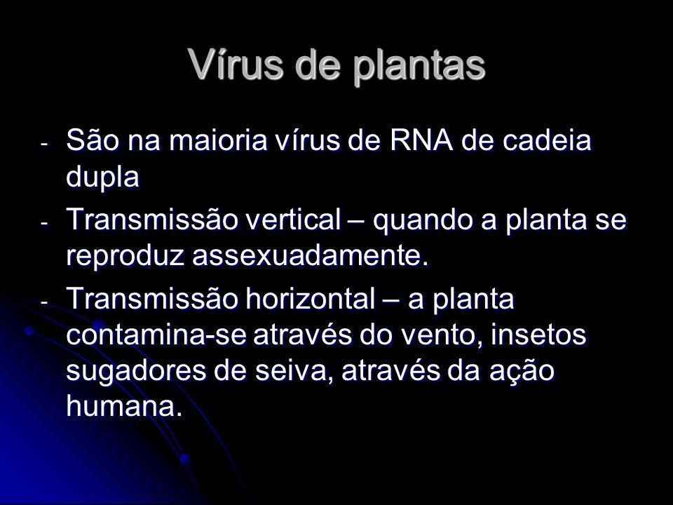 Vírus de plantas - São na maioria vírus de RNA de cadeia dupla - Transmissão vertical – quando a planta se reproduz assexuadamente. - Transmissão hori