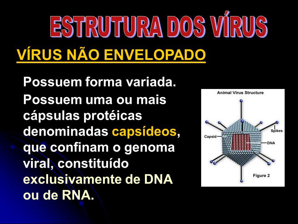 Possuem forma variada. Possuem uma ou mais cápsulas protéicas denominadas capsídeos, que confinam o genoma viral, constituído exclusivamente de DNA ou