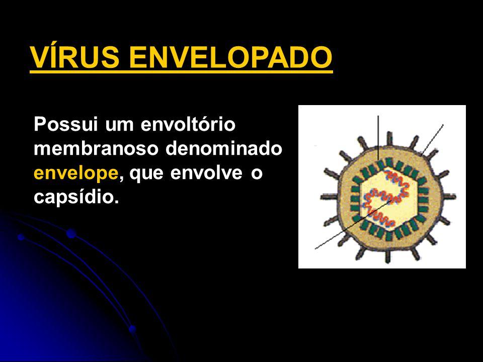 Possui um envoltório membranoso denominado envelope, que envolve o capsídio. VÍRUS ENVELOPADO DNA capsídeo envelope