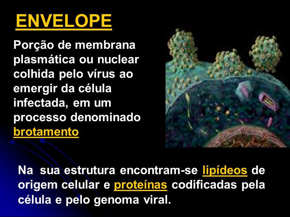 Na sua estrutura encontram-se lipídeos de origem celular e proteínas codificadas pela célula e pelo genoma viral. ENVELOPE Porção de membrana plasmáti