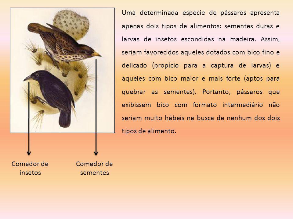 Comedor de insetos Comedor de sementes Uma determinada espécie de pássaros apresenta apenas dois tipos de alimentos: sementes duras e larvas de inseto