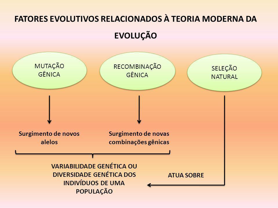 FATORES EVOLUTIVOS RELACIONADOS À TEORIA MODERNA DA EVOLUÇÃO MUTAÇÃO GÊNICA RECOMBINAÇÃO GÊNICA SELEÇÃO NATURAL Surgimento de novos alelos Surgimento