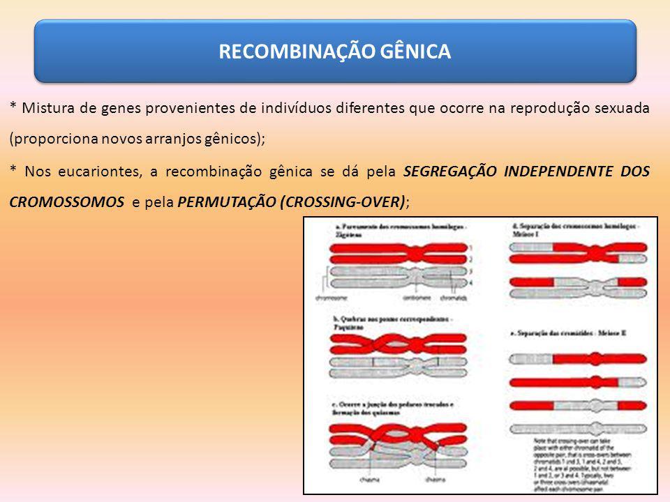 RECOMBINAÇÃO GÊNICA * Mistura de genes provenientes de indivíduos diferentes que ocorre na reprodução sexuada (proporciona novos arranjos gênicos); *