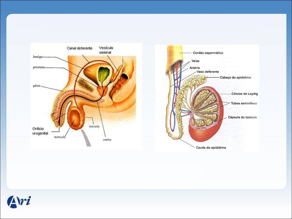 Órgãos Reprodutores Feminino OVÁRIOS Responsáveis pela produção de : -Células Reprodutoras: ÓVULOS.