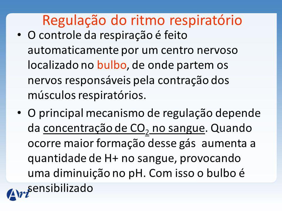 Regulação do ritmo respiratório O controle da respiração é feito automaticamente por um centro nervoso localizado no bulbo, de onde partem os nervos responsáveis pela contração dos músculos respiratórios.
